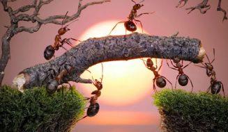 Loài kiến luôn cần cù và chăm chỉ