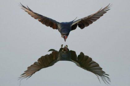 Hiệu ứng chim mồi trong kinh doanh