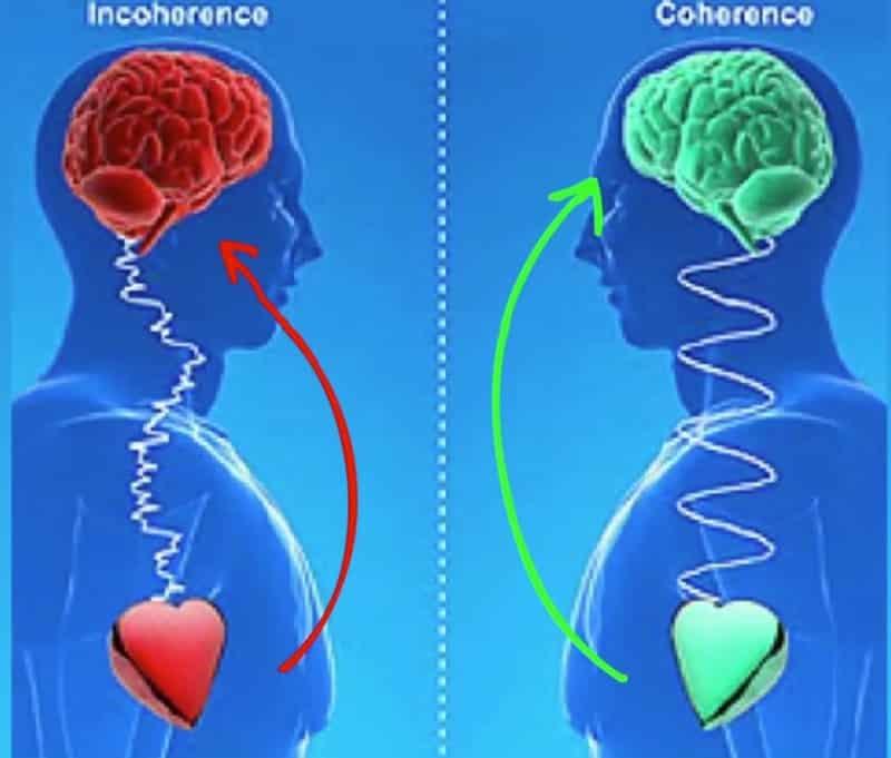 Trái tim giữ vai trò quan trọng trong các trải nghiệm cảm xúc, nó gửi thông tin đến não nhiều hơn chiều ngược lại